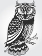 Decorative Owl - 31469631