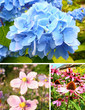 Collection of Summer flowers
