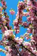 ramo di fiori rosa in primavera