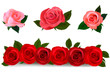 Big set of a beautiful colored roses. Vector illustration.