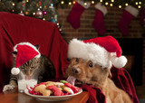 Cat and Dog devouring Santa