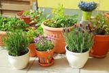 Fototapety Terrace or roof gardening
