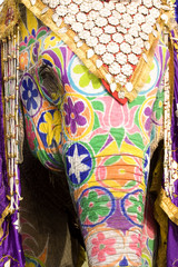 colorful elephant head,Jaipur, Rajasthan, India