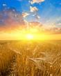 sunset on a wheat field