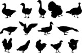 poultry silhouettes poster