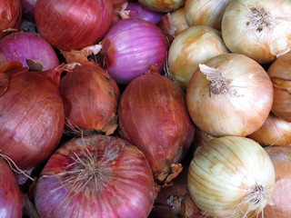 Close-up of fresh red & white onions