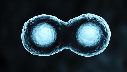 Dividing cells blue xray