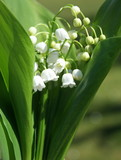 Fototapete Anbieten - Präsent - Blume
