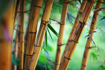 Bamboo forest background