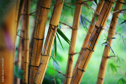 Foto op Aluminium Bamboe Bamboo forest background