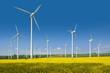 Leinwanddruck Bild - Windkrafträder in einem Rapsfeld