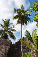 cocotiers et rochers de la Digue aux Seychelles