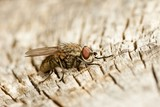Fly sitting on decayed wood poster