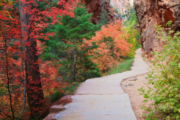 Zion Canyon Forest Path