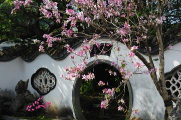 Chinese garden-4