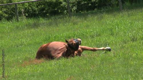 Lazy Horse Taking A Nap