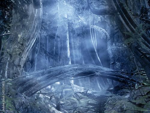 foresta con nebbia