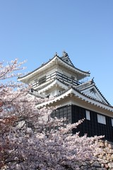 Japanese traditional castle with cherry blossom