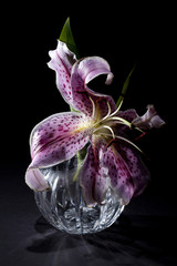 Lily in Vase