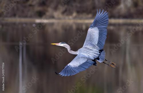 Fotobehang Vogel Great wing span.