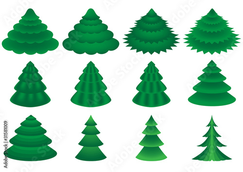 collection of various conifers on white