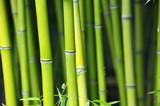 Obraz na płótnie Słońce przebijające się przez bambusowy las