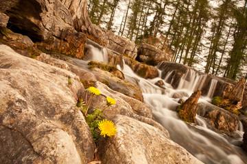 Waterfall and dandelion