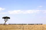Masai Mara Wildebeest Migration poster