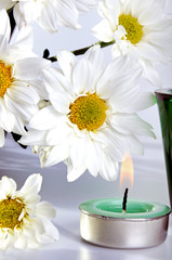 Simple white daisies and candle with isolated white background