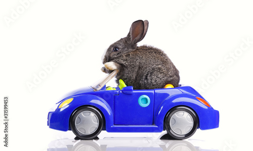 Rabbit driving a car