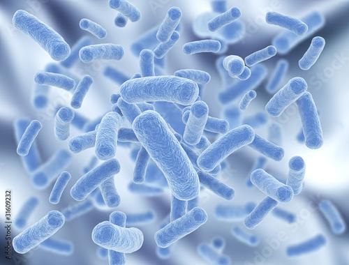 Bacteria - 31609232
