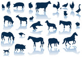 vector farm animals with reflection poster