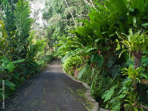 All e dans le jardin luxuriant tropical guadeloupe de for Jardin tropical guadeloupe