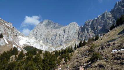 Gimpel - Tannheimer Tal