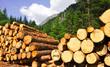 Brennholz - regenerative Energie
