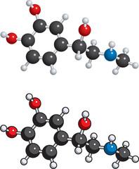 Adrenaline (adrenalin) molecule