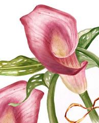 aquarelle pink calla
