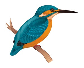 Kingfisher Vector