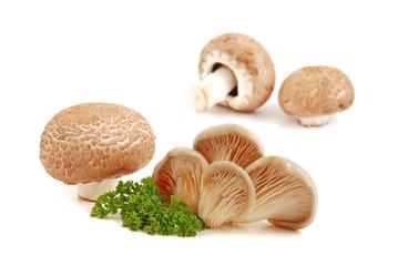 Austernpilz und Champignon