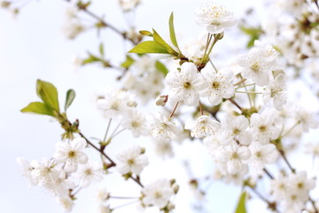 Life blooms