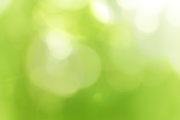 Green forest bokeh