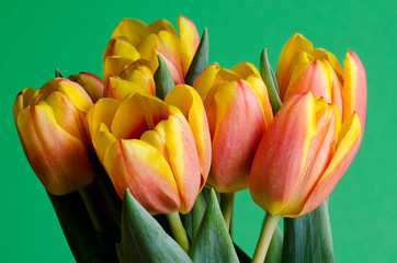 colorful fresh tulips