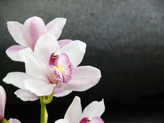 Wellness Orchidee
