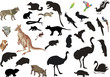 set of australian animals and birds on white