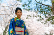 japanese kimono woman and cherry blossom