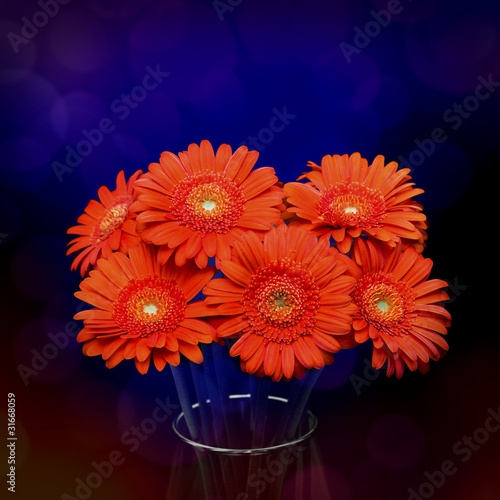 Gerberas in vase on dark background