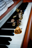 Dried rose on piano