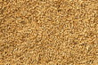 Barley Rice Malt