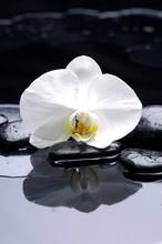 Spa encore la vie avec macro orchidée blanche et pierre noire