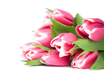 lying pink tulips and empty space